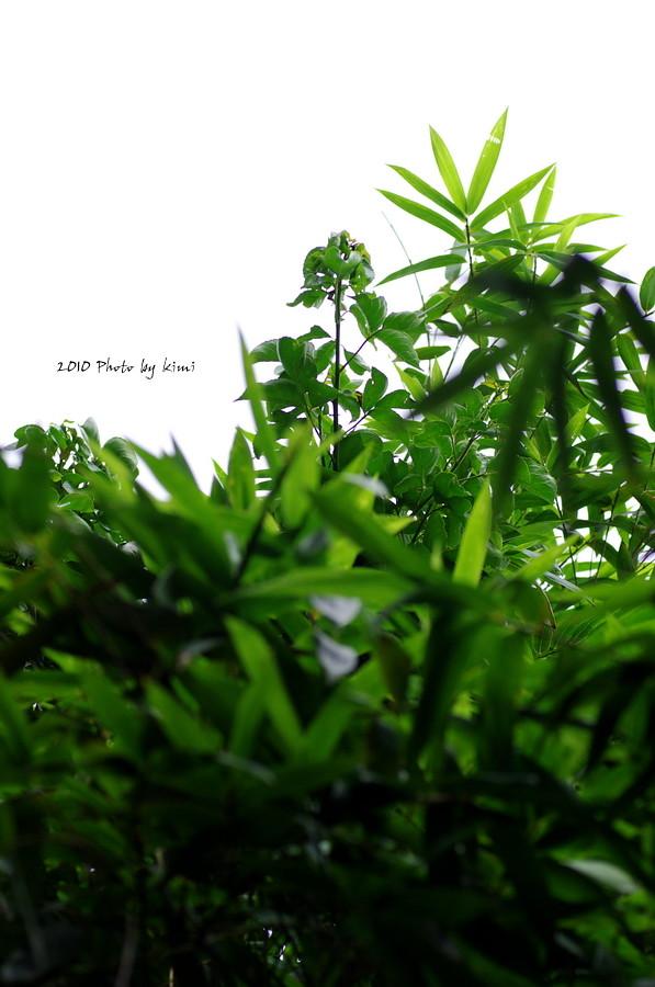 (慢)遊系列-03硬漢嶺
