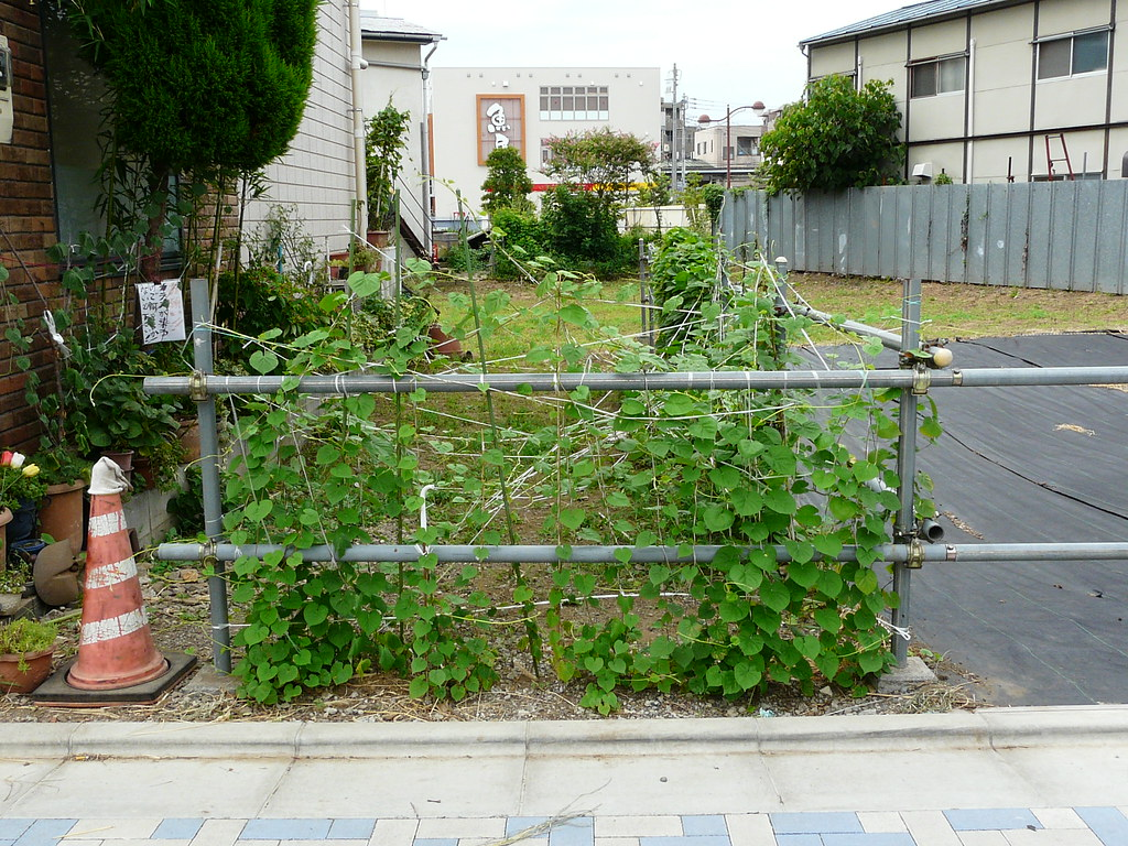 Trained Creeping Fence