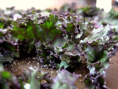 Kale Pre-Cook