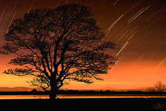 Run, Tree! The stars are falling! (2k Photography) Tags: star trails tree silhouette water reflection evening composition pushpdeeppandey ~2|{~ 2k