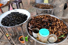 Cambodian roadside snacks: crickest, beetles, bugs