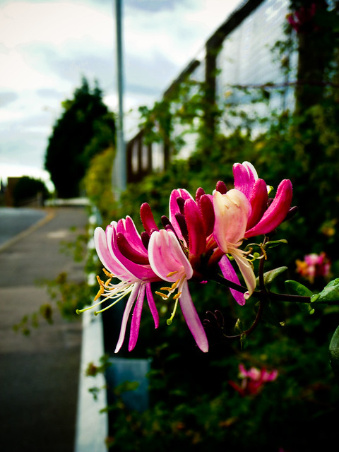 120810_ a flower that brightens my walk