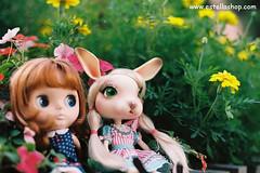 Cozy & Estella