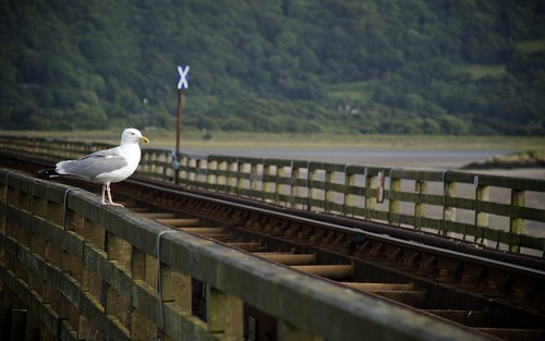 Gull On Barmouth Bridge