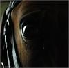Quelle Veine (Lù *) Tags: cavallo occhio animali