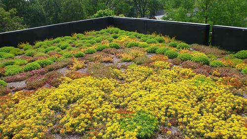 Extensive Green Roofs A Primer Green Roof Plan