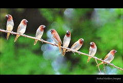 OF BIRDS AND BOKEH . . (Rahul Rallan) Tags: