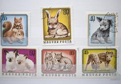 ANIMAL Stamps (migi328) Tags: rabbit animal 1974 hungary stamps