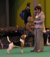 Sheriff, Kelseys mate, pictured at Crufts