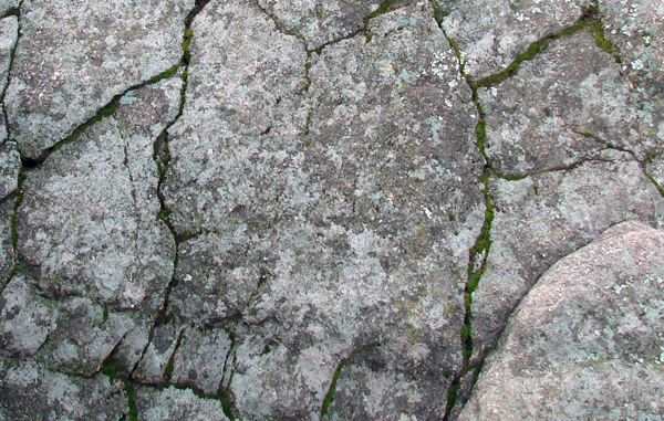 cracked-rock-algae-graffiti-help