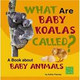 What are Baby Koalas Called