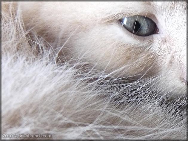 P1110409_kitten