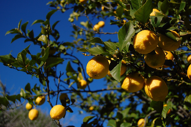 _lemons_