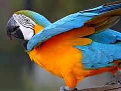 parrot (artfilmusic) Tags: santa zoo parrot barbara