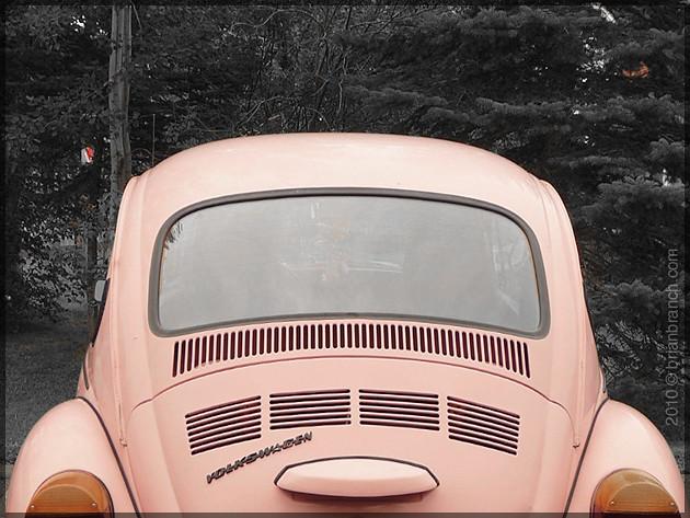 P1110390_beetle