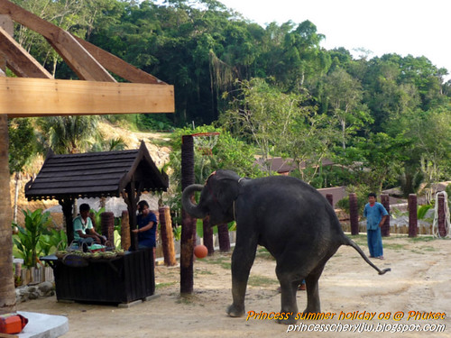Elephant trekking & Safari 32