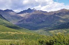 Gold Mint Valley (Cecil Sanders) Tags: mountains alaska nikon ak palmer hatcherpass matanuskasusitnavalley 99645 cecilsanders talkeetnamountainrange