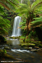 Beauchamp Falls (98octane) Tags: green water creek forest river waterfall rainforest stream australia victoria falls ranges lush ferns otway beauchamp