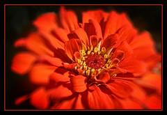 Red (FrAntknee) Tags: beta hdr highdynamicrange hdri highdynamicrangeimage highdynamicrangeimaging imageriegrandegammedynamique grandegammedynamique photoengine oloneo oloneophotoengine imagegrandegammedynamique oloneophotoenginebeta