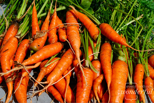 CarrotsPile