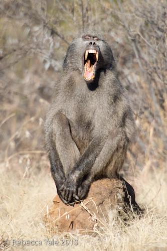 RYALE_Willem_Pretorius_Game_Reserve_21