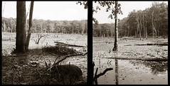 Wetlands (efo) Tags: bw diptych connecticut swamp hampton multiframe superikonta radostbyforest