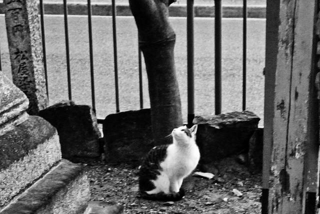 Today's Cat@2011-02-02