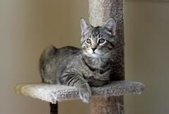 Jackson, January 21, 2011 (Maggie Osterberg) Tags: leica cat kitten nebraska jackson lincoln m8 maggieo 5014summilux