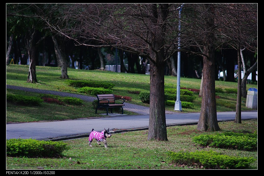 2011/02/04 大安森林公園-Osawa 135mm f2.8!
