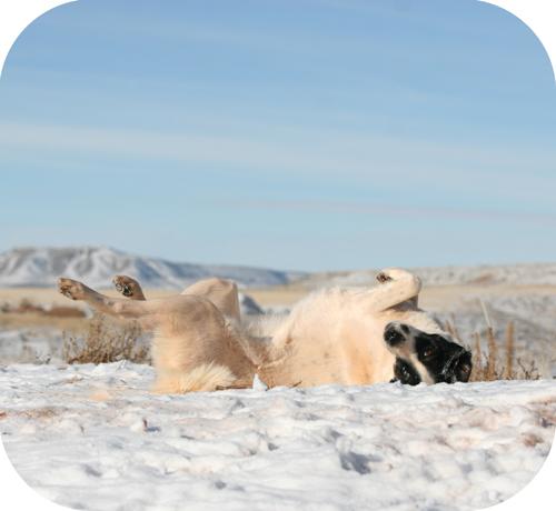 snowbathing3