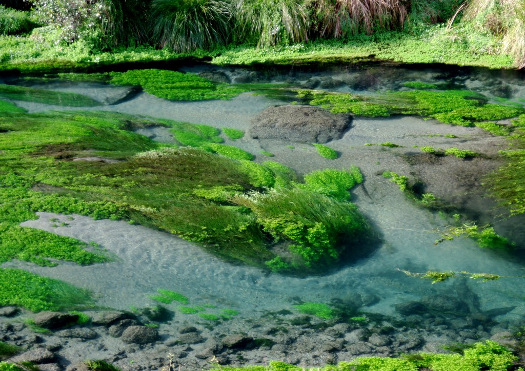 Магия реки Новая Зеландия