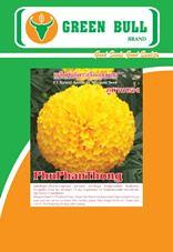 hạt giống hoa cúc Vạn thọ ลูกผสม ภูพานทอง hat giong hod cuc van tho phu phan thong  marigold flower seed ดอกดาวเรือง  www.greenbullseed.com 8.8  k