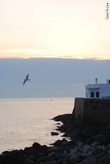 Flying (Chiara Riccia) Tags: gallipoli mare solte tramonto scorcio scoglio casa bianca bianco withe sea spiaggia salento litoranea lecce puglia italia italy gabbiano fly chiara riccia de luca chiararezza chiararezza7