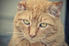 Fur-babies (Zingara Rose) Tags: pet moon green cat eyes kitten feline pretty critter kitty whiskers gypsy creations fourlegged