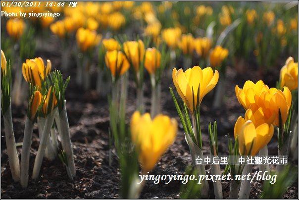 台中后里_中社光觀花市20110130_I6237
