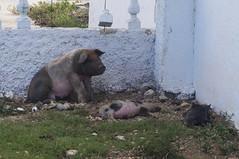 A quick drop by Vega de Palma town (lezumbalaberenjena) Tags: camajuani camajuaní cuba villas villa clara 2017 vega palma lezumbalaberenjena