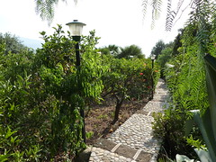 Limonengarten (Rossci) Tags: italien italy garden lemon italia sicily garten sicilia zitronen sizilien limonen aspra mongerbino