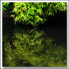 Zen water world (ZedZap Photos) Tags: green bamboo minimal zen contemplative miksang topazsimplify zedzap magicunicornverybest