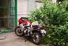 Pisica motociclista