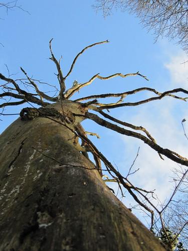 thunderstruck oak