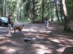 GoSniff, Juni 2010 (Cave Cani) Tags: seminar hunde hundeschule suchspiel hundetraining hundeerziehung nasenspiel nasenwelt gosniff nasenarbeit sucharbeit schleppfhrte hundetrainingteamarbeit