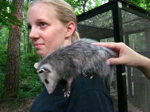 Petting the baby possum.