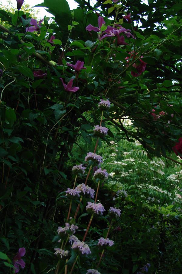 planten van boven