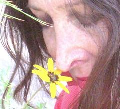 The Fragrance (Chic Bee) Tags: morning light portrait flower yellow collage mystery garden early focus soft post mosaic vibrant candid grain enigma fragrant mysterious daisy noise striking processed glance sonorandesert enigmatic perennial fragrance yellowdaisy candidportrait nativeplant colornoise chocolateflower droughtresistant lyrata berlandieralyrata selfseeding chocolateplant quartersize berlandiera artisticimpressions impulsivecreations misscecily likefilmgrain chocolatescenteddaisy redstripedundersides chocolatecoloredstamens
