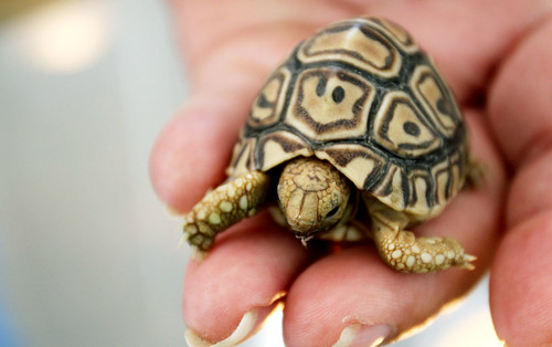 Tort in your hand