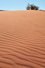 Poem of the wind (andre.djng) Tags: nature sand desert wind jordan humps