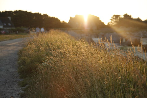 Swaying grass bathed in golden sunlight