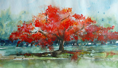 Thalande - Flamboyant (Plume de soi (e)) Tags: