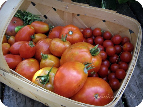 basket of 'maters