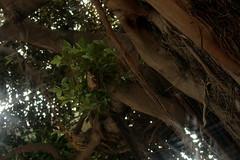 Bäume auf dem Marktplatz in Águilas, Murcia